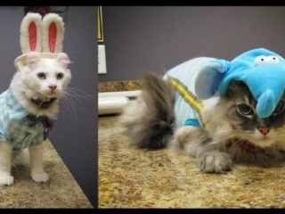 American Curl, Dexter, Cruze, Halloween Costume Champions, Wags 2 Whiskers