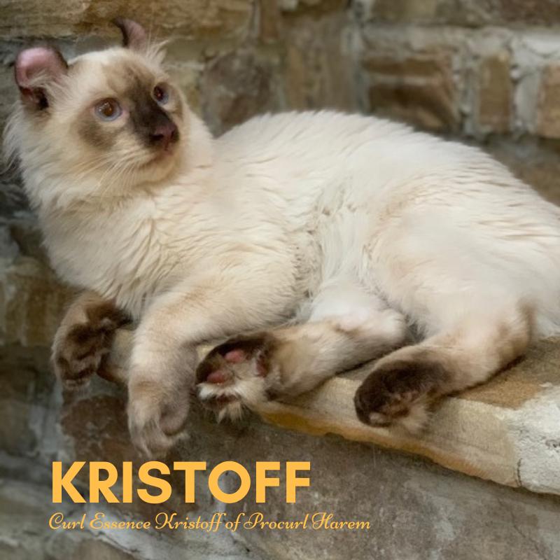 Kristoff of Procurl Harem